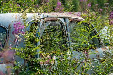 Paarse bloemen uit blauwe auto van Axel Weidner