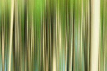Door de bomen van Halma Fotografie