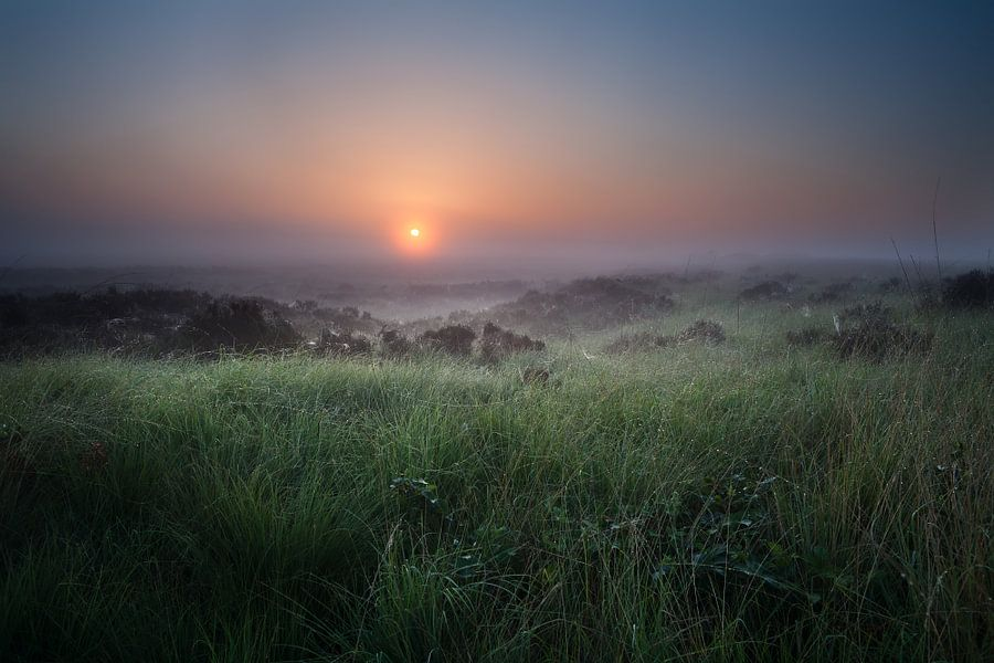 Summer misty sunrise