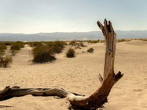 Baum in der Wüste von