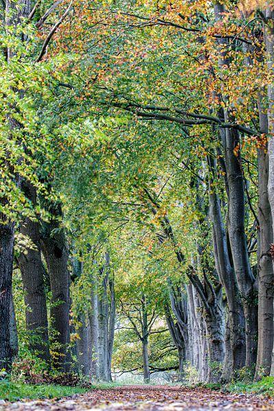 Sentier d'automne sur Anjo ten Kate