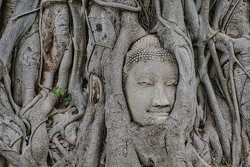 Buddha Denkmal im Baum von Bernd Hartner