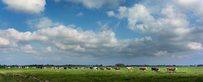 Koeienmars in Groningen van Bo Scheeringa
