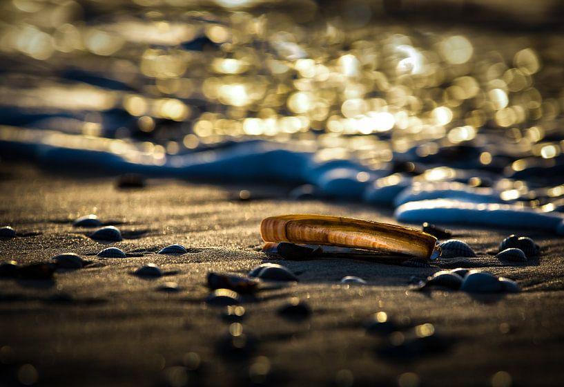 Muscheln am Strand von Arjan Boer