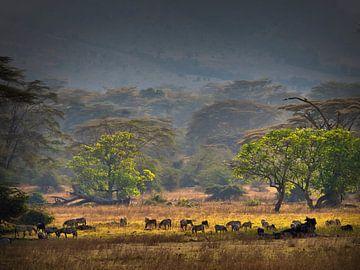 """""""Garten Eden"""", im Kratermund des Ngorongoro. von Machiel Zwarts"""