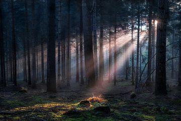 Sonnenaufgang im Wald von De Afrika Specialist