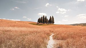 Toscane van Dimitri Louwet
