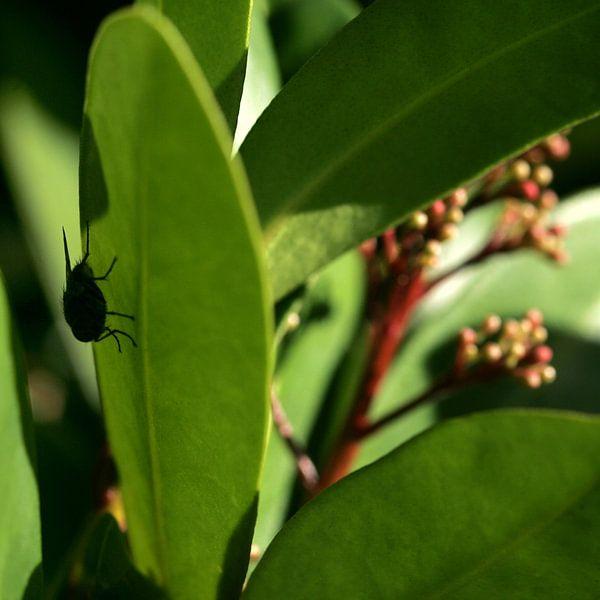 Een vlieg verstopt op een plant van Lynn van Baaren
