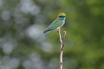 Groene vogel in het groen van Ingrid Bargeman