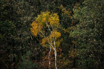 Fall Splendour - bos met herfstkleuren