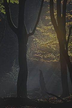 Mysteriöser Wald von Dirk-Jan Steehouwer
