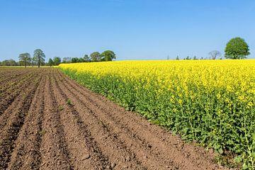 Landschaft mit gepflogenem Feld und gelbem blühendem Feld von Rapssamenanlagen von Ben Schonewille