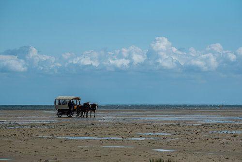 Paard en wagen op de wadden