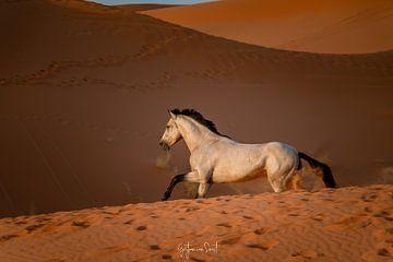 Wunderschönes galoppierendes weißes Pferd in der roten Wüste von Gertjan van Soest