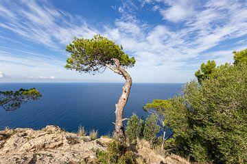 Banyalbufar Westküste Mallorca von Dennis Eckert