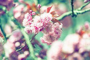 Schöne Blüte von Sebastiaan van Stam Fotografie