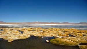 'Drijvende mossen', Bolivia