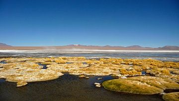 'Drijvende mossen', Bolivia van Martine Joanne