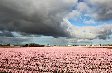 Donkere wolken boven bloembollenveld van Wilma Overwijn