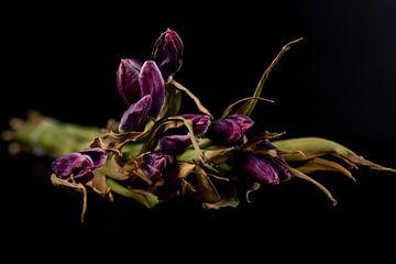 Verlepte tulpen van Gaby Hendriksz