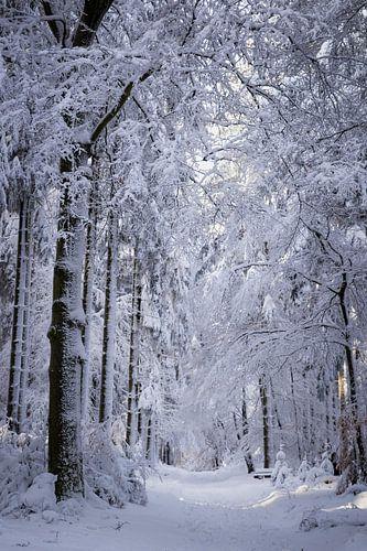 Besneeuwde bomen in Duitsland
