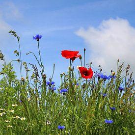 panorama des champs sur Ostsee Bilder