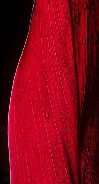 Close-up rood blad met dauwdruppels 2 van Ellis Peeters
