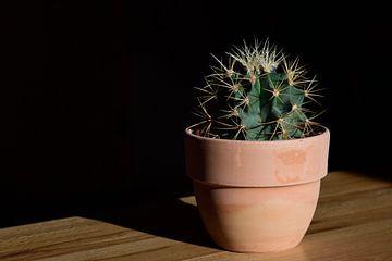 Cactus in pot van Ulrike Leone