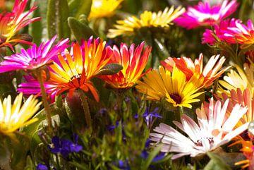 Ijsbloemen van Marcel Pietersen