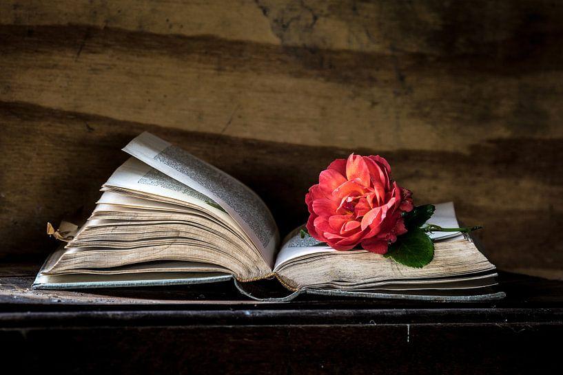 Buch &Ampel; Rose von Simone Karis