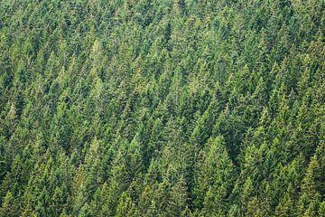 Grünes Muster der Baumkronen von OCEANVOLTA