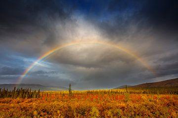 Regenboog boven taiga in herfstkleuren van