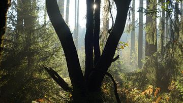 Tussen De Bomen van Daphne Photography