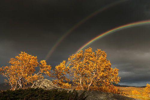 Herfst op een hoogvlakte in Noorwegen