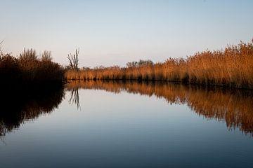 Der Wasserlandschaft - Oostvaardersplassen von Jesse Lamberink