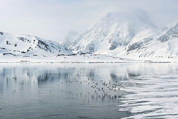 Vögel begleiten uns auf unserer Reise durch Spitzbergen von Gerry van Roosmalen