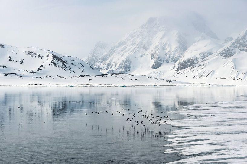 Vogels vergezellen ons op onze reis door Spitsbergen van Gerry van Roosmalen