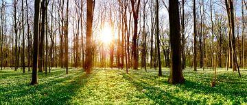 Frühling im Wald von Günter Albers