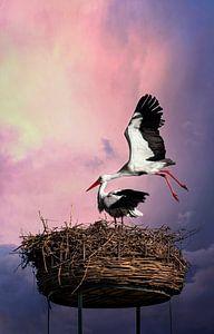 Ooievaars in nest tegen mooie achtergrond van Chihong