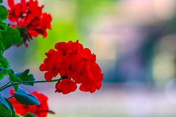 Bloemen bij de Hofvijver van