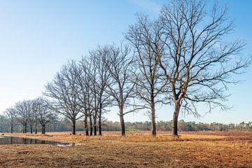 Reihenhohe Bäume am Ufer eines kleinen Sees von Ruud Morijn