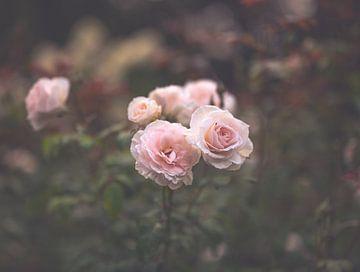 Blumen Teil 188 von Tania Perneel