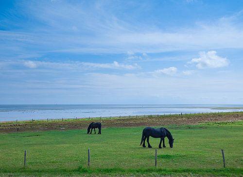 Grazende paarden op Vlieland. van