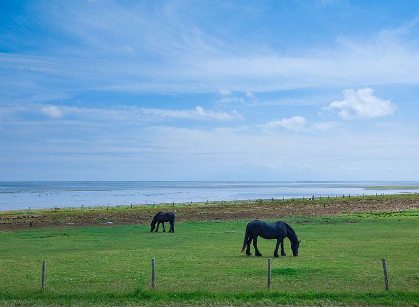 Grazende paarden op Vlieland. van Hennnie Keeris