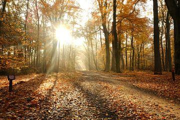Herbstfarben in der Natur - 1 von Danny Van Silfhout