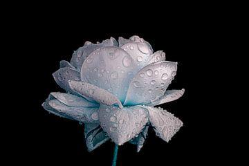 vochtige roos fantasie van Ribbi The Artist