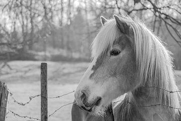 HORSE van Thomas Depauw