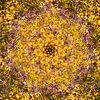 Summer Garden van Frans Blok thumbnail