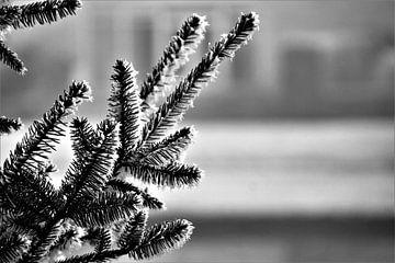 Winter in contrast van Marije Zwart