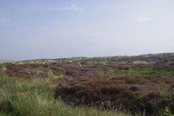 Duin terrein von Ad Steenbergen